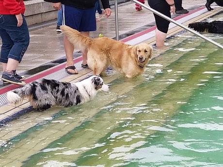 Freibad Elsdorf . Hundeschwimmen Teil 2, Foto: von Kempen