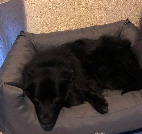 Ein neues Bettchen für Betty