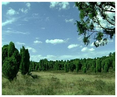 Heideort Bispingen Naturschutzgebiet Steingrund