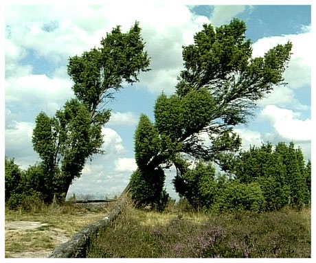 Naturpark Lünebuger Heide Hannibals Grab