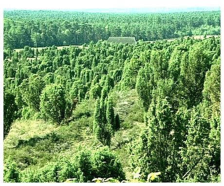 Naturpark Lünebuger Wcholder im Totengrund