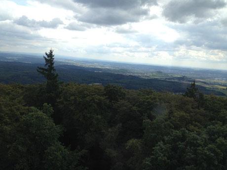 Hegstrauch mit Blick auf Krofdorfer Forst