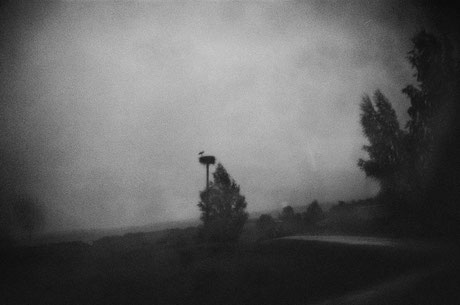 LATVIA / From the book 'Auftakt'. Stork's nest, 2008