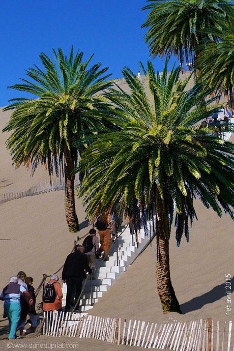 La Dune du Pilat et ses palmiers