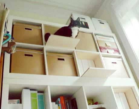 Projekt Bahrenfeld Miezraum Raumdesign Für Katzenfreunde