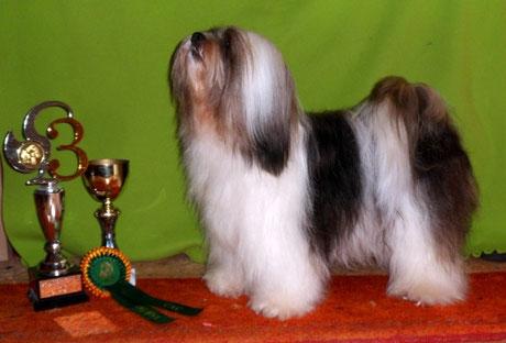 BOB Paaren 2013 Tibet Terrier Lhahi-ma Balla-chen-po