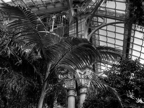 das Palmenhaus I