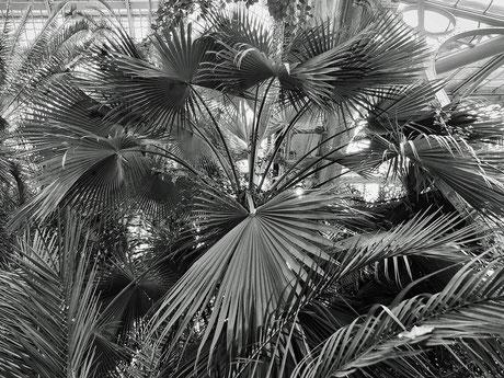das Palmenhaus II