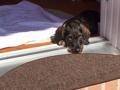 Vito liebt Sonne