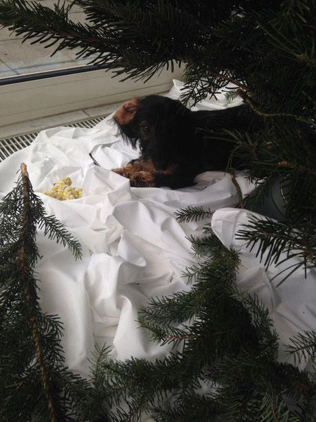 Blankas Lieblingsplatz unterm Weihnachtsbaum