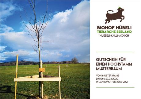 Baumpatenschaft, Baum schenken, Hochstammbaum, Bäume pflanzen, Baum pflanzen