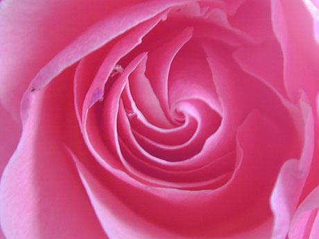 rose - Lyzzz