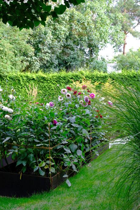 dieartigeGARTEN // August Garden - high beds with dahlias / Knie-Hochbeete mit Dahlien