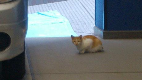 朝ヨガの時に見かける猫