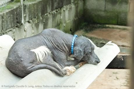 Um cachorro triste com sarna negra. Ele precisa vitaminas e tratamento!