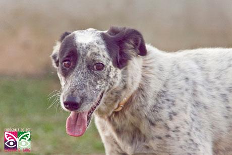 Pirata, 2-3 anos, cão companheiro, muito doce e ele adora caminhar, tb nasceu na ONG e nunca foi escolhido.