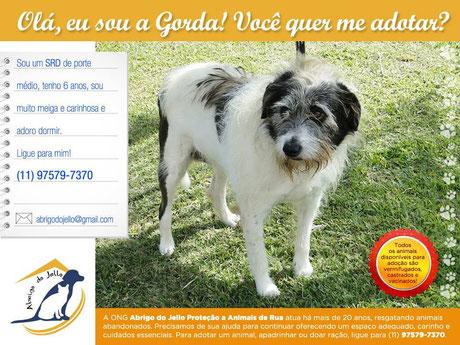 Adote um cão calmo de porte médio para crianças: Gorda   abrigodojello@gmail.com