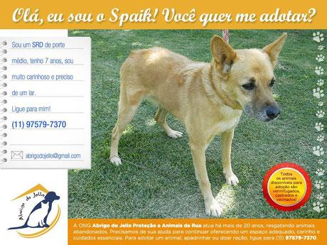 Adote o Spaik, cão de porte médio  abrigodojello@gmail.com