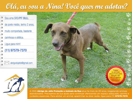 Adoção de pet: Nina é uma cadela bastante carinhosa! abrigodojello@gmail.com