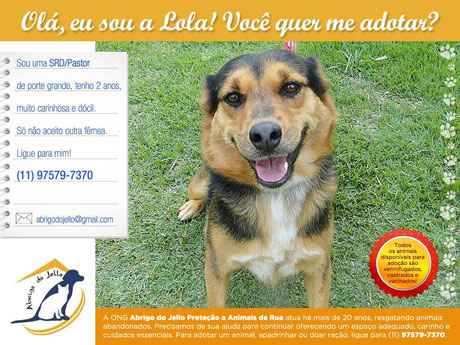 Adote uma fêmea: Lola   abrigodojello@gmail.com