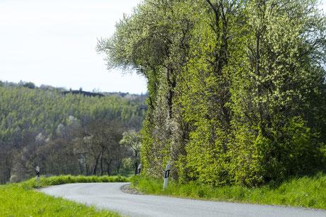 Spring in Vogtland