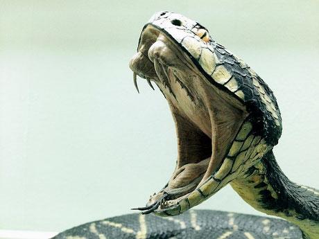 ヘビの毒にも負けない元気は鍼灸から