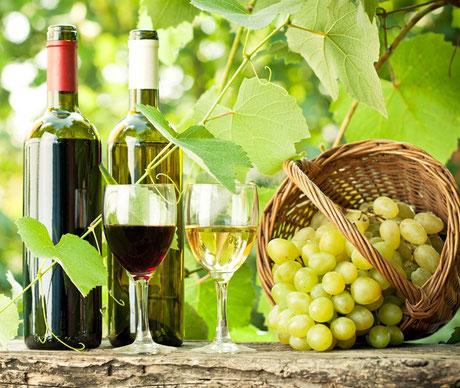 Weinprobe Rotwein Weißwein