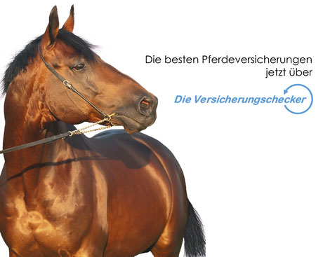 Beste Pferdeversicherungen