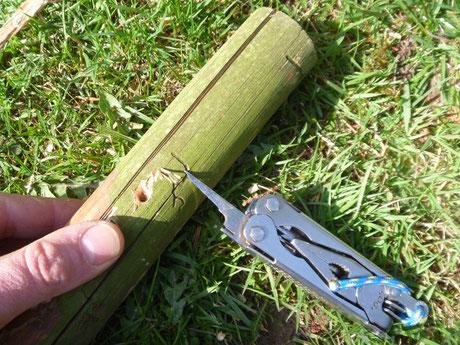 Fallenbau Survival, Tierische Notnahrung, Jagdrecht Survival, Nahrungsbeschaffung im Notfall