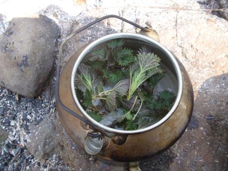 Heilkräuter Tee, Tee aus der Natur, Tee aus Brennesseln, Survival Küche, Wildnisküche, Outdoorküche