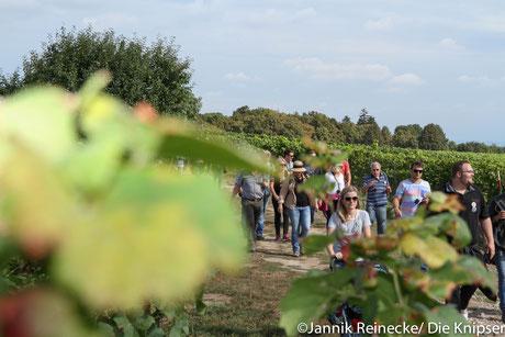Viele Menschen wanderten mit ihren mini Gläsern,Freunden, der Familie und guter Laune durch die Weinberge Osthofen.
