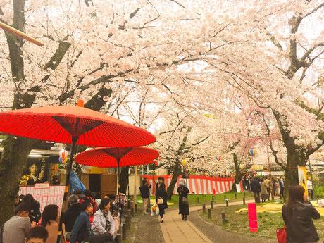 平野神社で花見