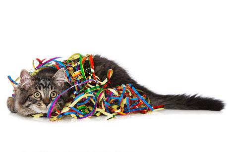 Silvester bedeutet Stress für Hunde und Katzen