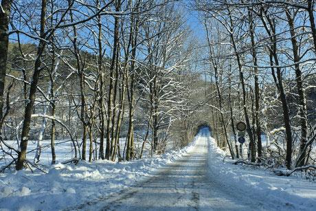 Andreas Maria Schäfer, Fotografiewelten, fotograph1956@web.de, Winter,Schnee, Bäume, Weg, Hallenberg, Sonne,