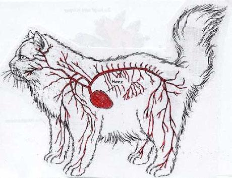 Quelle:http://www.katze-und-du.at/aktuell/Katzen-Biologie/Herz-Blutkreislauf-Katze/Blutkreislauf-Katze_high.jpg?1164123677