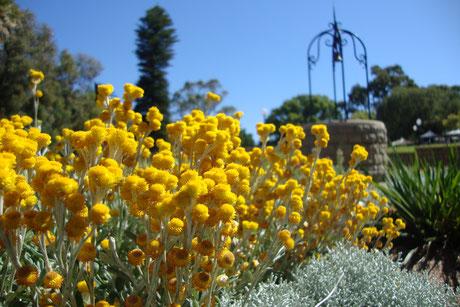 massif de fleurs jaunes arrière plan puits ancien avec margelle