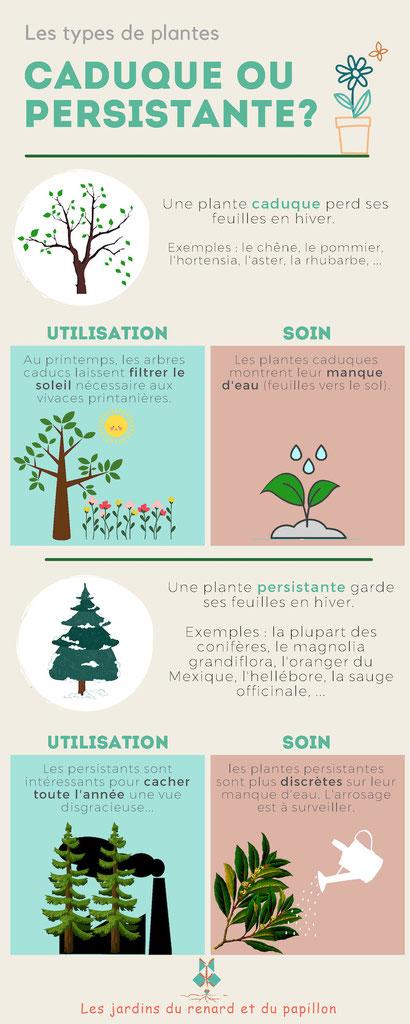 Différences entre plantes caduques et persistantes