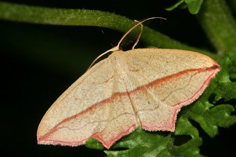 Schmetterlinge Nachtfalter und Kleinschmetterlinge