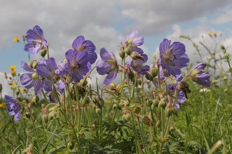 lila / blau / violett