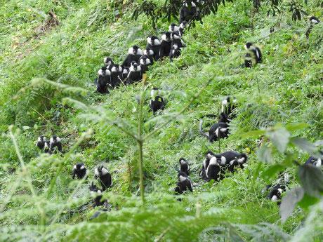 rwanda_safaris.jpg