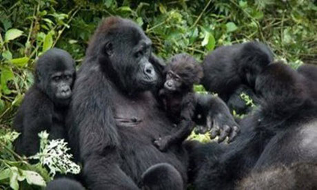 5-days-fly-in-gorilla-tour-in-uganda.jpg