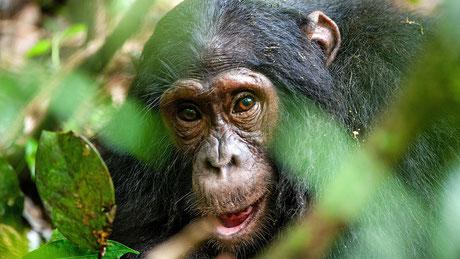 rwanda_gorilla_trekking.jpg