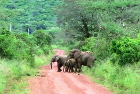 gorilla_trekking-rwanda.jpg