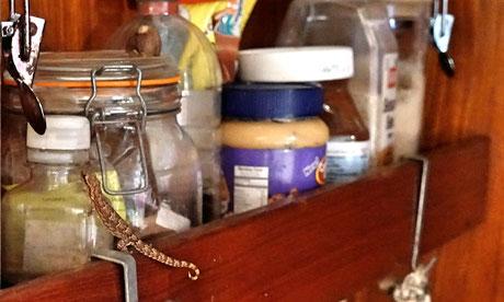 Sancho in der Küche am Honig
