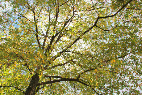 Waschmittel aus Kastanien selbst herstellen - Seife selber machen - Herbst - Blog - Praxis Thielmann
