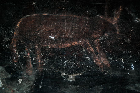 Bushmen painting of a Kudu or Gazelle, South Africa near a farm. Under some rocks, half of a cave.