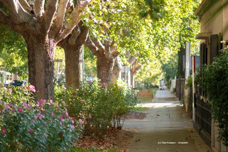 Mit Bäumen gesäumte Straßen sind nicht nur gut für's Klima. Sie bieten Schutz vor Wind und machen das Wohnviertel attraktiver.