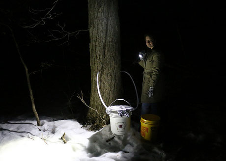 Nighttime photo of collecting sap from maple tree, courtesy of Glenn Marsch.