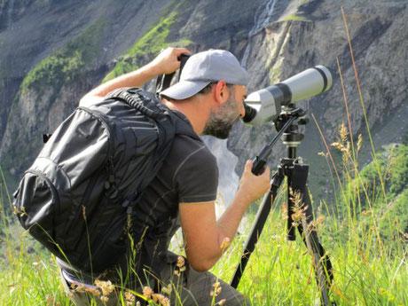 randonnée observation chamois montagne à briançon, serre chevalier