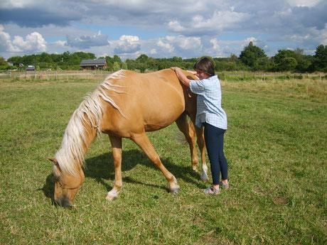 Cheval et Sens : la rencontre avec le cheval en psychothérapie